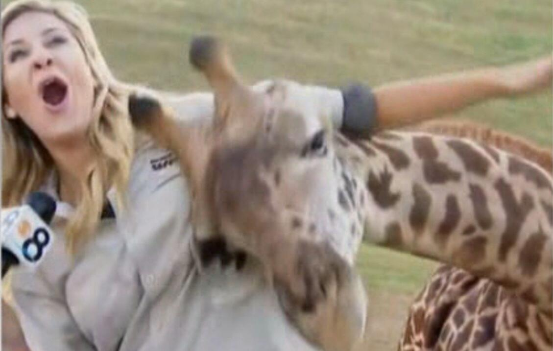 Bild zu Giraffe, Reporterin